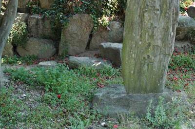 貝塚跡には呉竹の井戸の石碑が建っています。